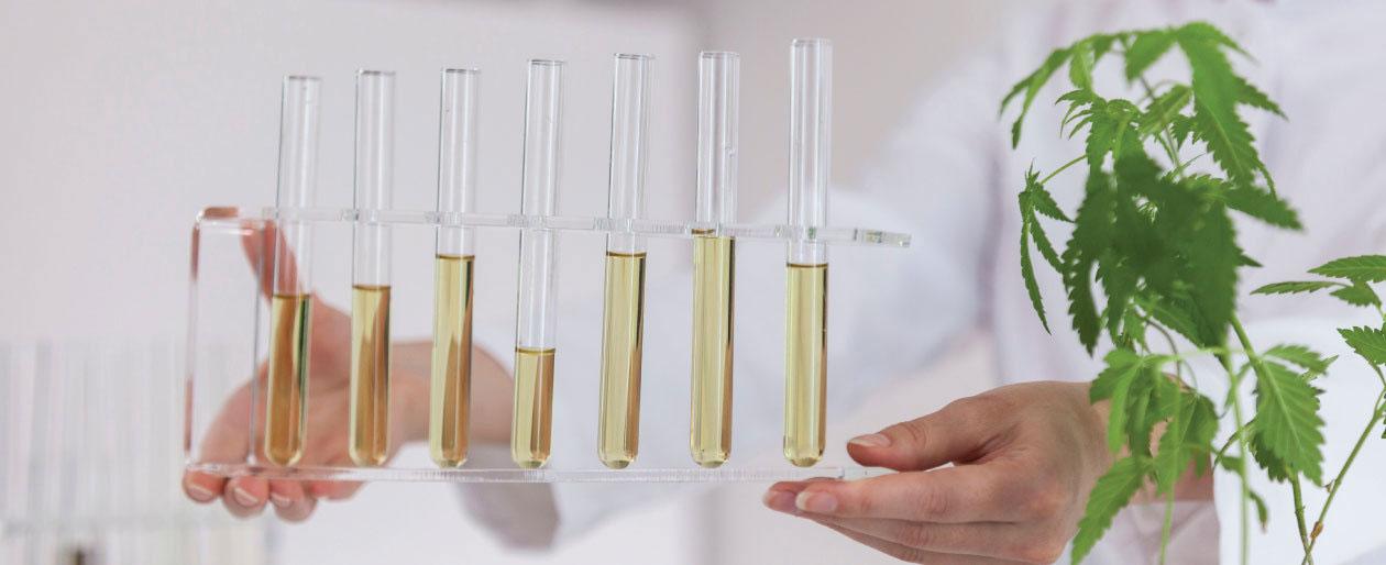 cannabis hemp testing lab