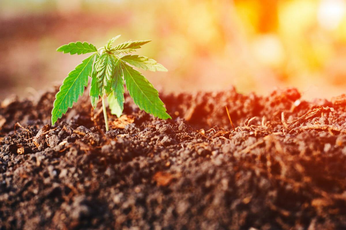 hemp farming contract processing